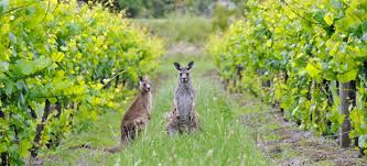 The Most Extreme Vineyards in Australia